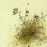 『此処_07』 / 90.9×30.3cm / 和紙、岩絵具、墨
