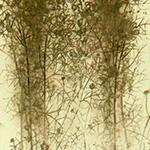 『此処_11』 / 90.9×30.3cm / 和紙、岩絵具、墨