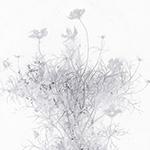『此処_19』 / 90.9×30.3cm / 和紙、岩絵具、墨