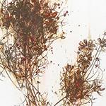 『此処_23』 / 90.9×30.3cm / 和紙、岩絵具、墨、鉄粉